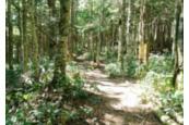 トドマツ林