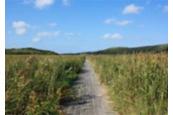 湿地帯に伸びる木道