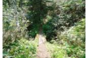 コース中盤の林間道